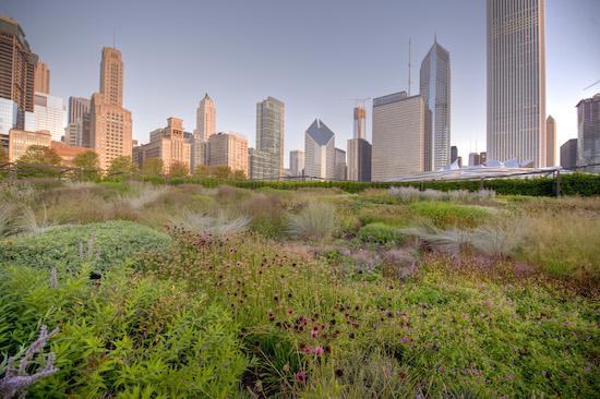 Millenium Park Lurie Garden