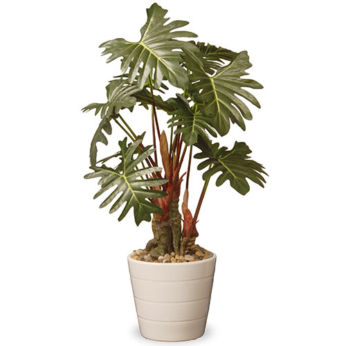 21-inch-Philodendron-Plant-in-Green-Ceramic-Pot-78cb3934-2a6a-4241-b786-eca3707d1132