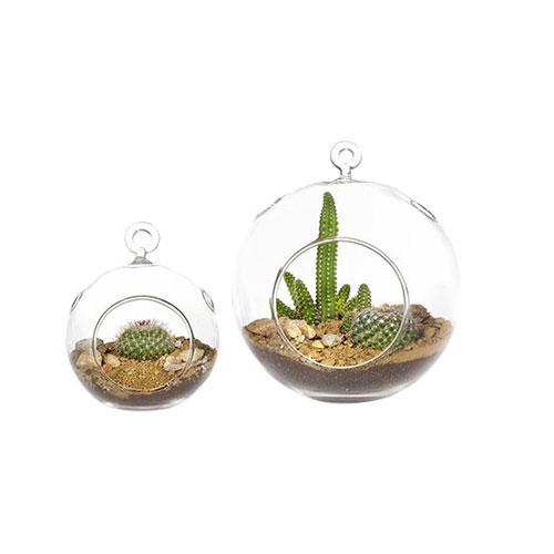 2-Piece-Mammillaria-Cactus-Hanging-Plant-in-Terrarium-Set-LGMG-1000