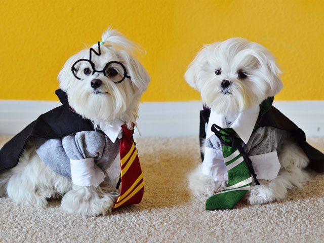 & 8 Halloween Costumes Even Your Pet Will Love - FabFitFun